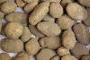 Kartoffeln Linda festkochend