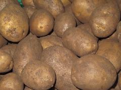 Kartoffeln Talent, mk