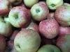 Apfel Jonagored NATURLAND KLII