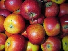 Apfel Topaz BIOLAND KLII