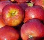 Apfel Red Prince II