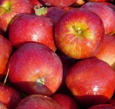 Apfel Red Jonaprince KLII