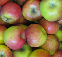 Apfel Topaz KLII Demeter