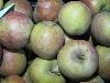 Apfel Boskoop mit Hagelschaden KLII