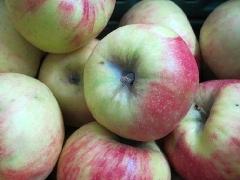 Apfel Elstar 60+ KLII