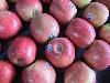 Apfel Cripps Pink KLII