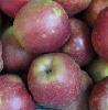 Apfel Boskoop HKII