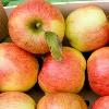 Apfel BraeburnBIOLAND KLII