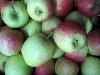 Apfel Delbartesteval KLII