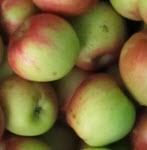 Apfel RubinstarKLII