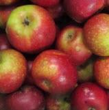 Apfel Ingrid Marie II