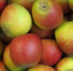 Apfel Holst.Cox NATURLAND KLII