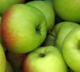 Apfel Ambassy KLII