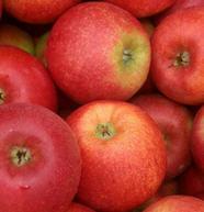 Apfel Antares KLII