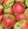 Apfel Sansa KLII