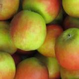 Apfel Holsteiner Cox 60-75 KLII