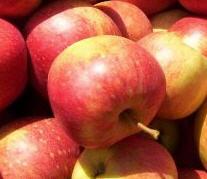 Apfel Jonagored DEMETER KLII