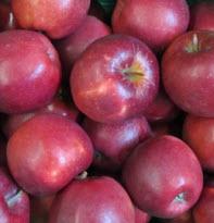 Apfel Marnica 75+ KLII