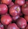 Apfel Marnica DEMETER KLII