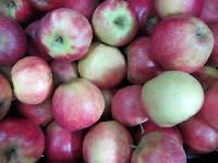 Apfel Galant