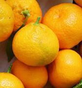 Clementine, Satsumas kernlos