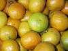 Clementine= Satsuma KLII kernlos