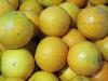 Orange Spätsorte KLII