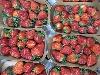 Erdbeere CAAE KLII