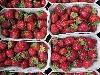 Erdbeeren BIOLAND KLII