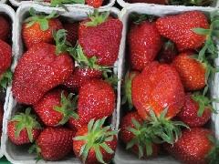 Erdbeere kleine Schale BiolandKLII