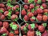 Erdbeeren regional KLII
