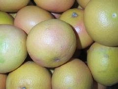 Grapefruit rotfleischig, groß