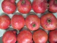 Granatapfel Sorte Mollar