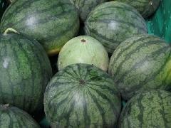 Wassermelone kernarm