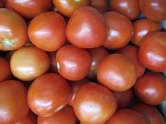 Tomate rund KLII