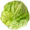 Salat, Eisbergsalat foliert CAAE KLII