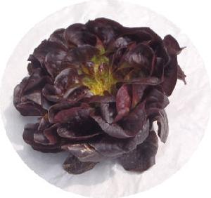 Salanova rot BIOLAND KLII