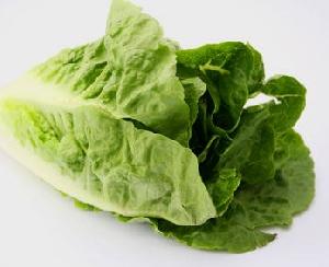 Salat, Römersalat Mini 2 Stk. gepackt