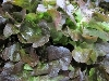 Salat, Eichblatt rot BIOLAND KLII
