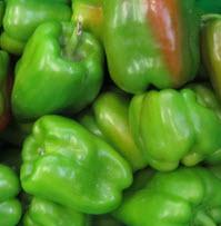 Paprika grün, Spanien, KLII