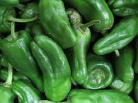 Paprika grün, spitz, Bioland KLII