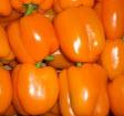 Paprika orange KLII