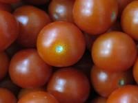 Tomate rund CAAE KLII