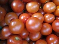 Tomate rund deutsch KLII
