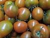Tomate Sorte Camoro KLII,
