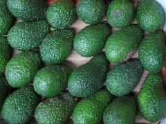 Avocado Hass Spanien, Jalhuca