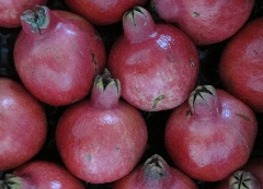 Granatapfel Sorte Wonderful