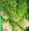 Salat, Frisee Endivie ECOCERT KLII