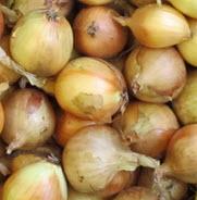 Zwiebel gelb 35-60