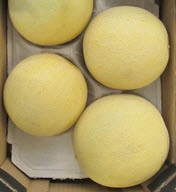 Melone, Galiamelone